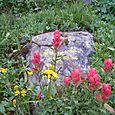 Wild Flowers near Long Lake - July 2005