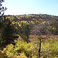 Aspen in Rocky Mountain National Park